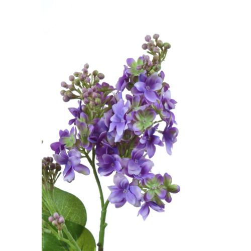 Bez x2 72cm sun301 lt violet