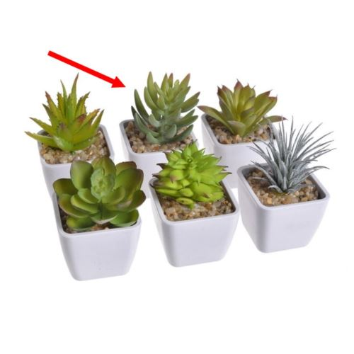 Mini kaktus w doniczce  9cm