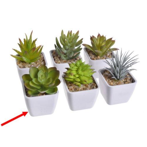 Mini kaktus w doniczce
