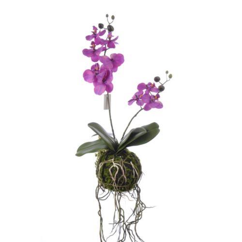 Storczyk Orchid x2 w kuli z mchu 43cm purple