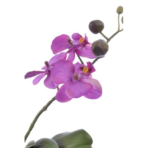 orchid phalaenopsis in mud ball, 43 cm, purple, 6/