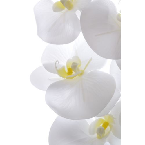 Orchid phalenopsis x7 DY002 102cm natural white ye