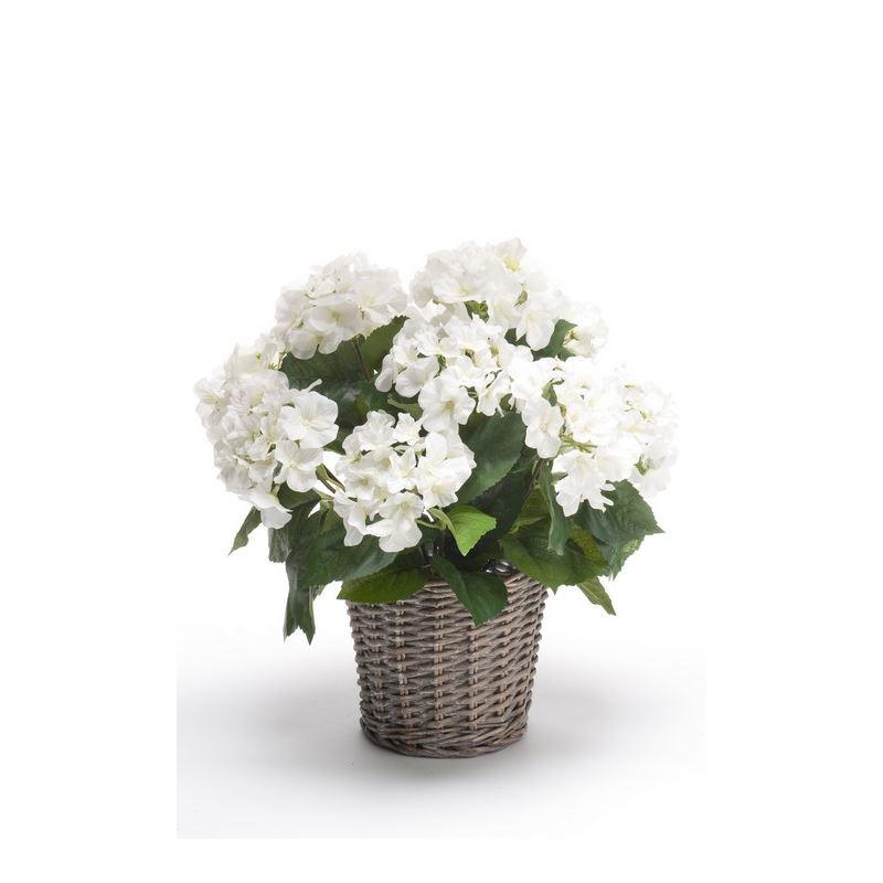 Hydrangea bush 45cm white in basket d20cm