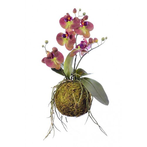 Orchid spray x3 in moss mud 41cm bur-gr