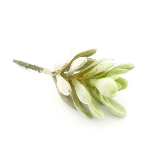 Succulent Pick 15 cm