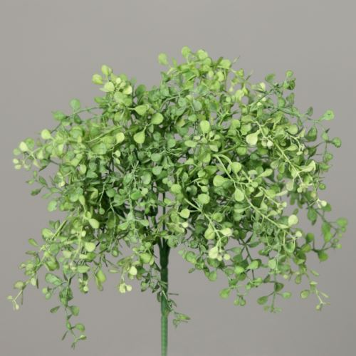 Myosotis-Bush 25 cm