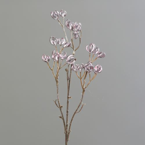 Spindle tree metlic 52 cm rose