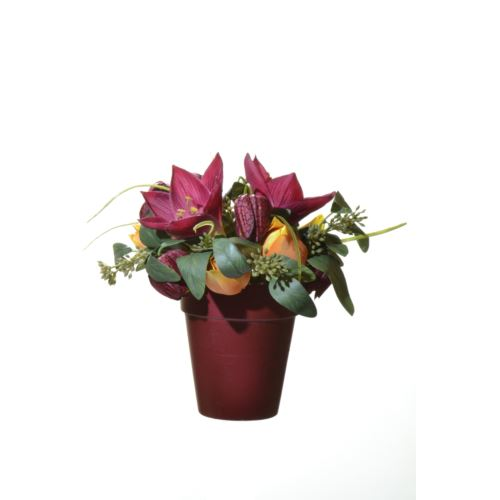 Hiperastrum tulip snoke in pot 21cm red bur 49665