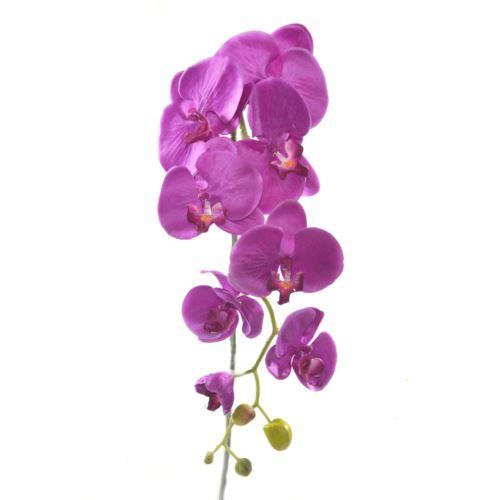 Storczyk sun315 97cm 1411 purple
