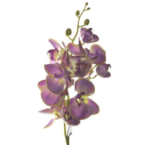 Storczyk phalenopsis x3 75cm sun008 dirty violet