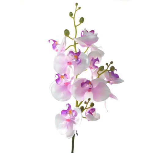 Storczyk phalenopsis x3 75cm sun008 lt violet