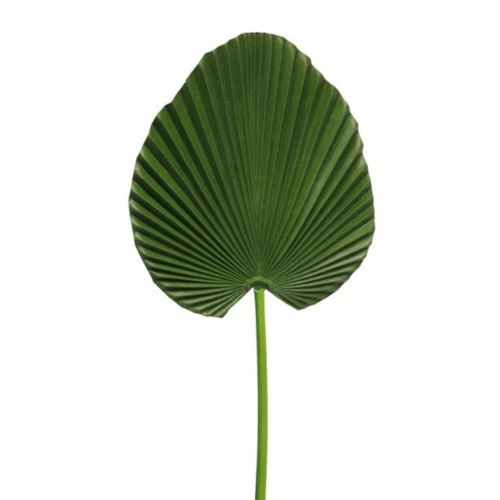 (Best) Washingtonia leaf small green 74cm