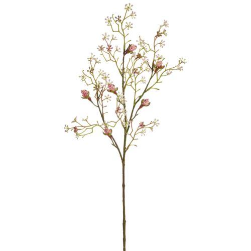Klon pączki 75cm rose