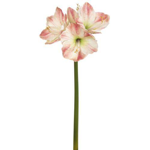 "Amaryllis x 4  75cm weiß-rose ""natural touch"""