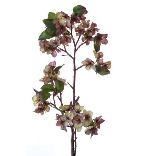 Jabłonka jesienna DY14-42A 100cm pink violet
