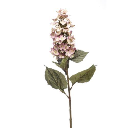 Hortensja bukietowa paniculata 90cm lt purple