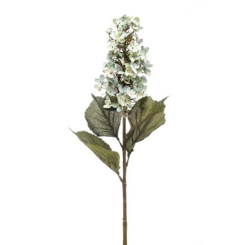 Hortensja bukietowa paniculata 90cm blue