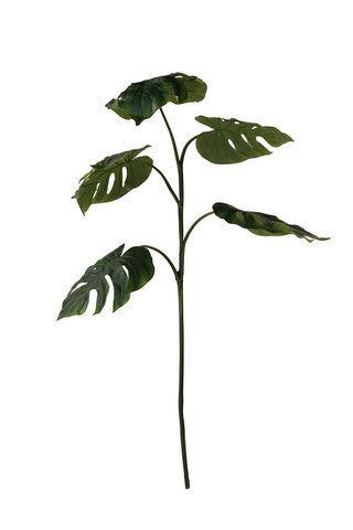 Monstera branch 130cm/5lvs