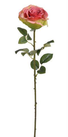 Roza x1 67cm
