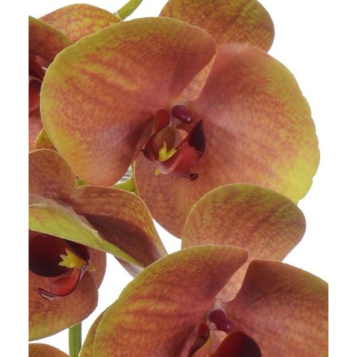 Orchid real touch 106 cm zb014 1