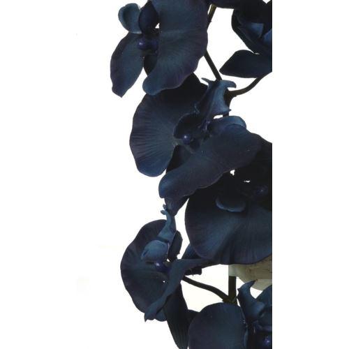 PHALAENOPSIS  NAVY BLUE
