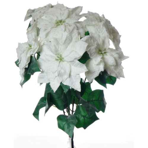 BUSH 6 POINSETTIE INNEVATE 42 cm WHT