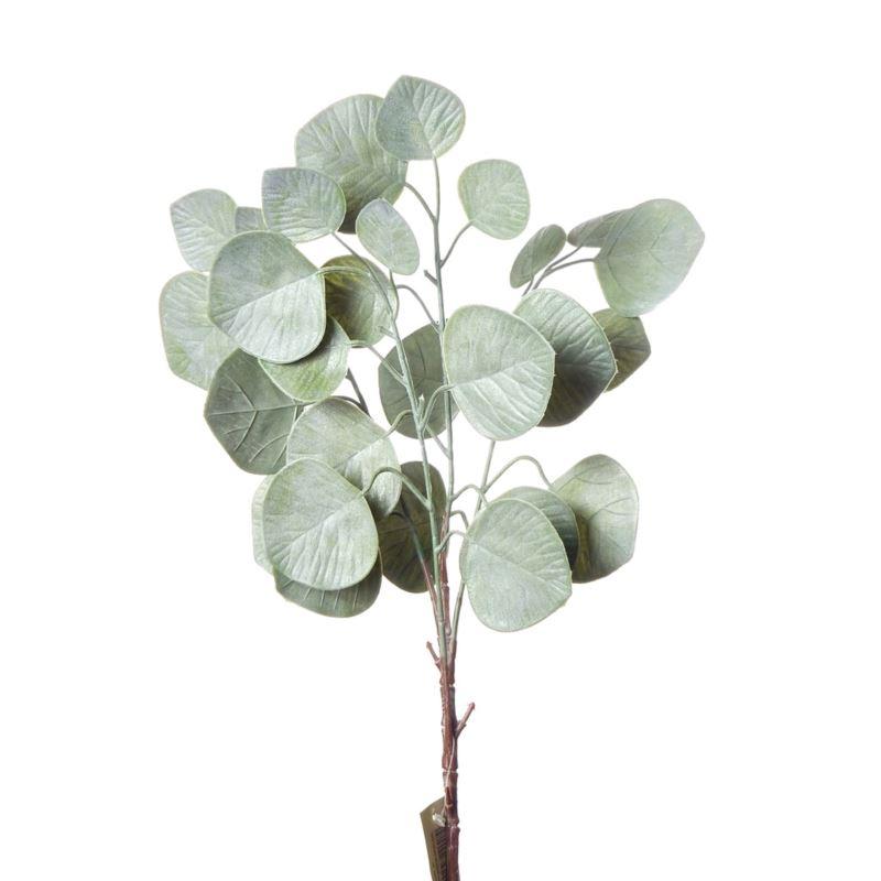 Eukaliptus populus -sztucz.rosl.