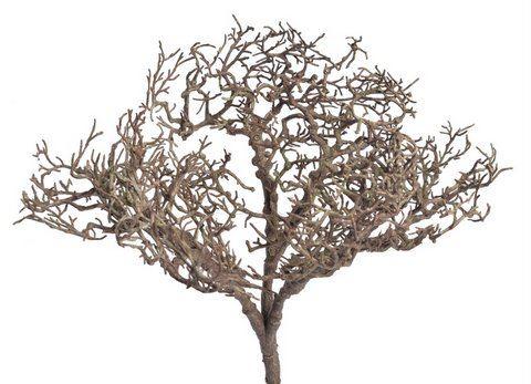 Krzak borowki bez lisci 26cm