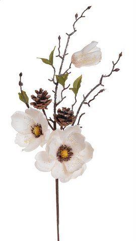 Galazka magnolii osniezona