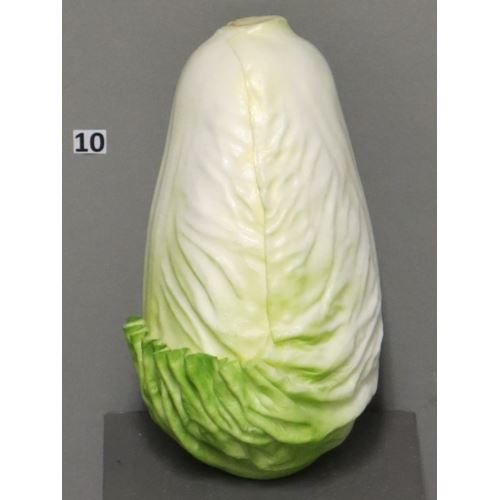Endive small green 17cm (S)