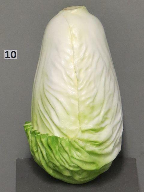 Endive small green 17cm (S)