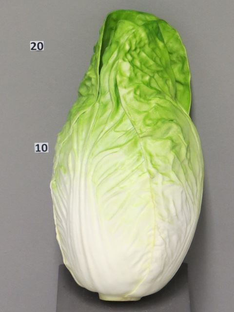 Endive large green 28cm (S)