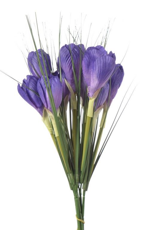 Krokus x2 /0548 Violet
