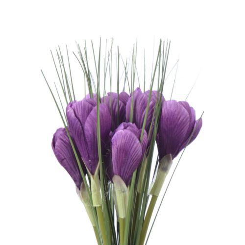 Krokus x2 /0548 Purple
