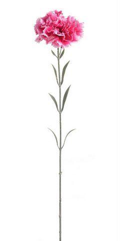Gozdzik x1 59cm