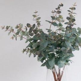 Eukaliptusy