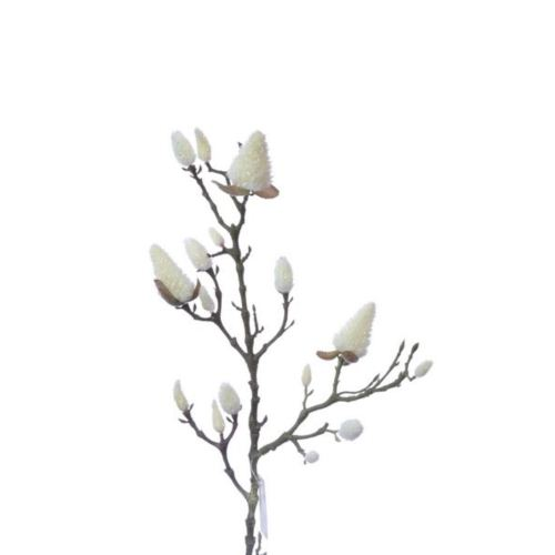Magnolia śn./1280