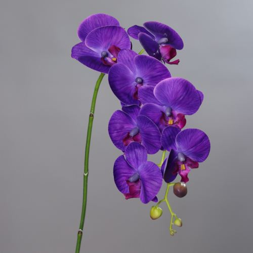 Orchid Phalaenopsis with 8 flowers, 104 cm, purple
