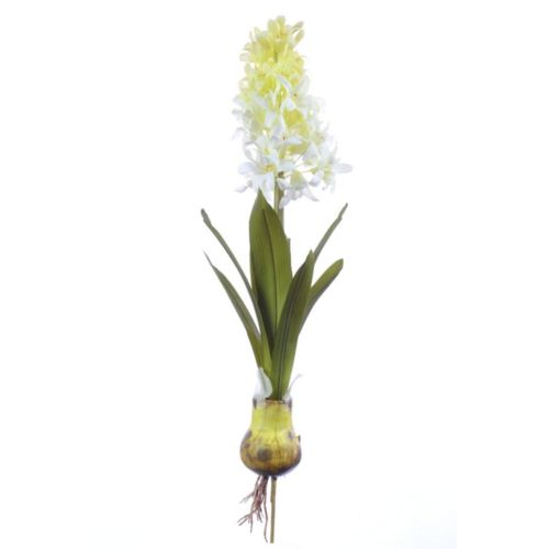 Hyacinthus Hulton cream 45cm (S)