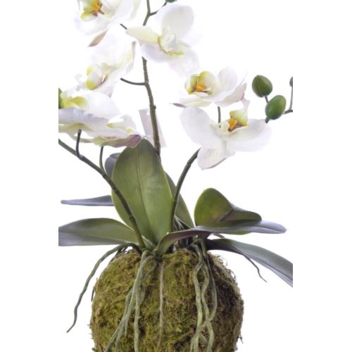 Orchid spray x3 in moss mud 41cm wh