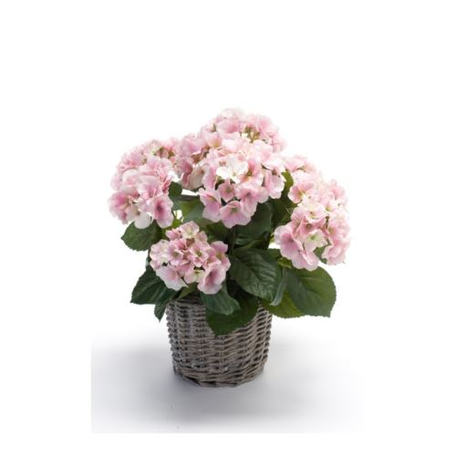 Hydrangea bush 45cm pink in basket d20cm