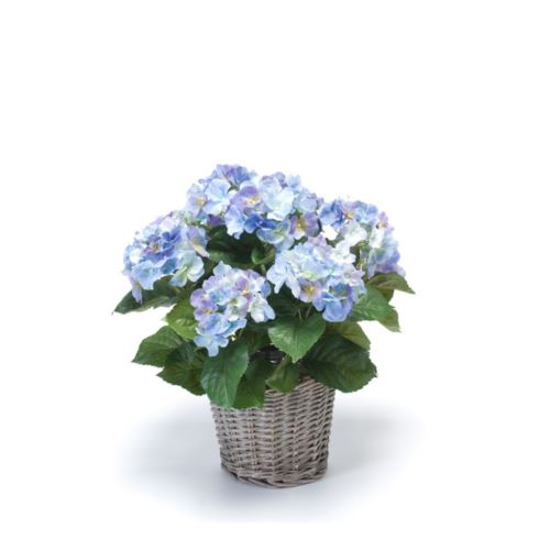 Hydrangea bush 45cm blue in basket d20cm