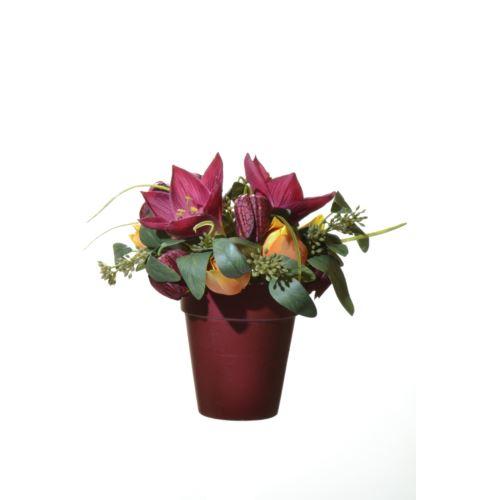 Hiperastrum tulip snoke in pot 21cm red bur 49665