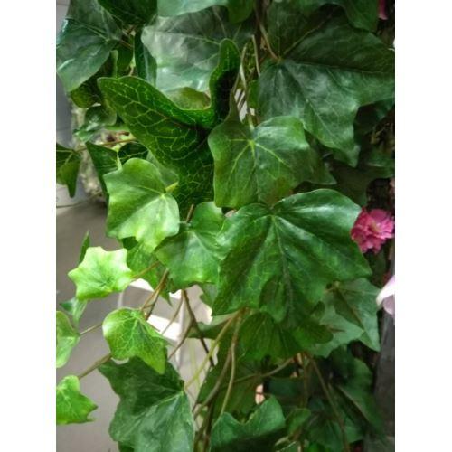 Bluszcz hedera 95 cm natural bl00627 green