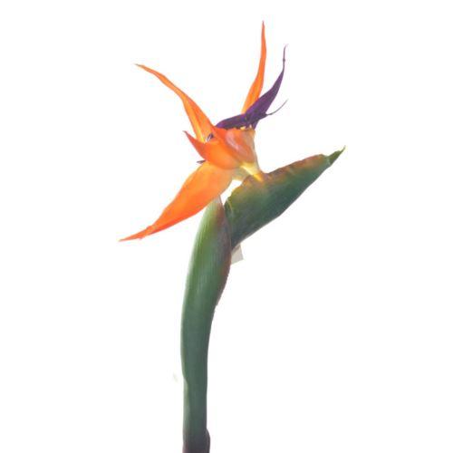 Strelitzia large natural orange 110cm