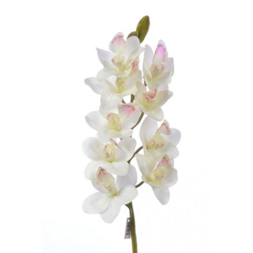 Storczyk Cymbidium 88cm DY001 cream pink