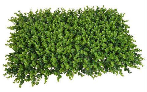 Mata eukaliptus 60x40