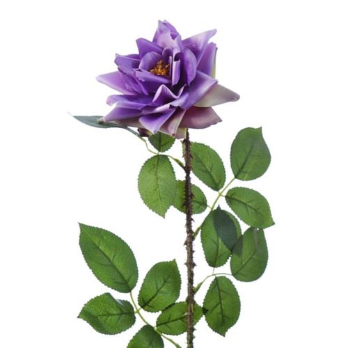 Róża single hort rose 72cm sun552 dirty violet