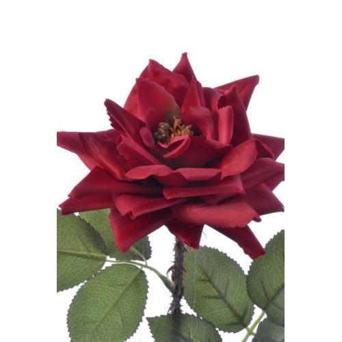 Róża single hort rose 72cm sun552 dr red