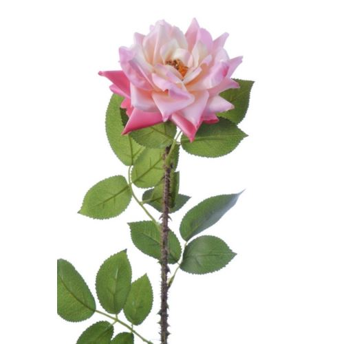 Róża single hort rose 72cm sun552 pink